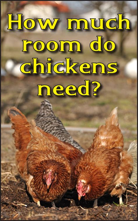 how much room does a chicken need in a coop how much room do chickens need backyard poultry