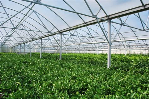 greenhouses in florida greenhouses hoophouses and hydroponics oh my central
