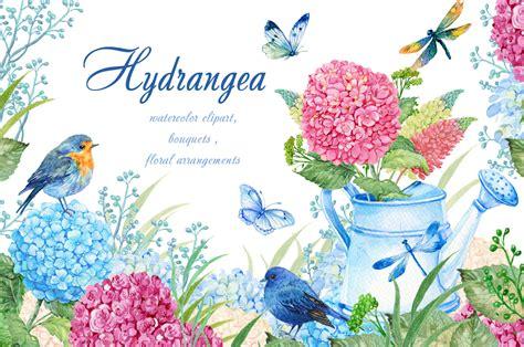 watercolor clipart hydrangea watercolor clipart by clipart shop