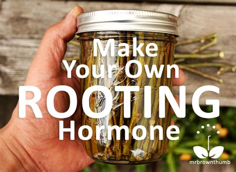 Hormon Root Up By Aprilia Garden make your own rooting hormone from willow twigs mrbrownthumb