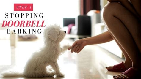 how to stop barking at how to stop dogs from barking at the door thedogtrainingsecret