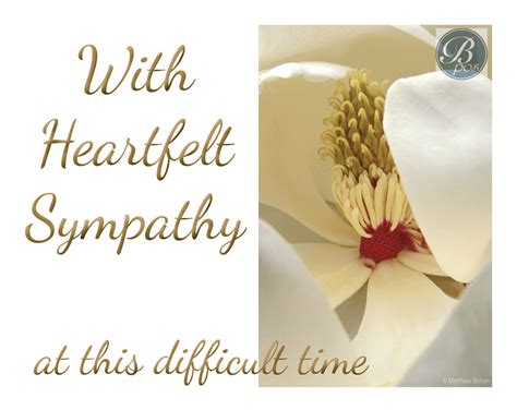 sympathy card template word sympathy card templates pictures inspiration resume