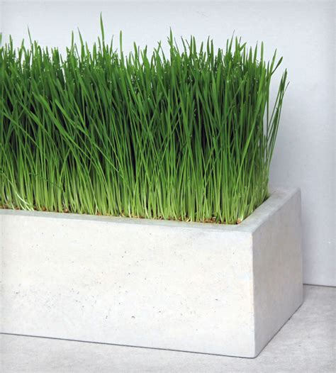 concrete planter box designs homesfeed