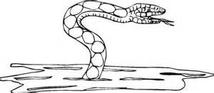 water moccasin coloring page download