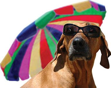 how to keep dogs cool in summer how to keep your cool and comfortable in summer grooming eastern