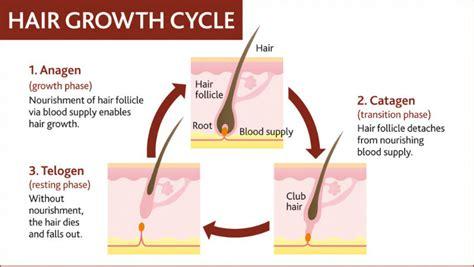 Shedding Phase Of Hair by New Eyelash Induction For Eyelash Growth Treatment