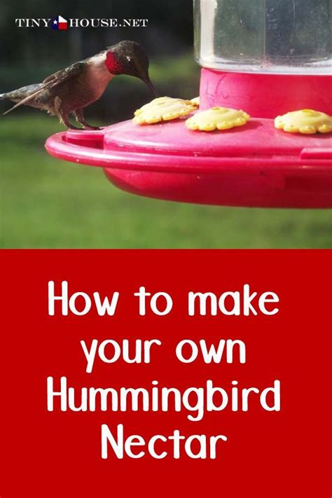 best 25 making hummingbird nectar ideas on pinterest