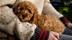 Designer dogs 8 popular pups mnn mother nature network