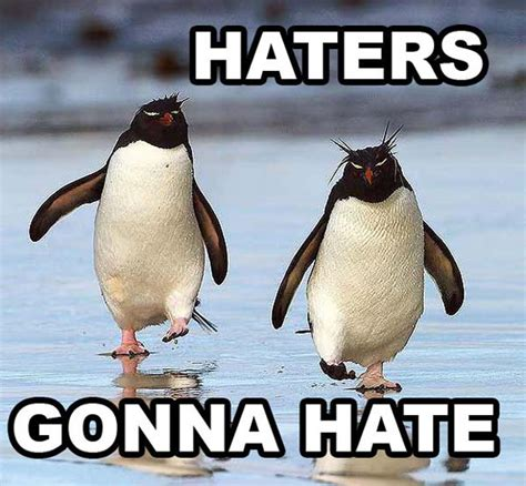 Penguin Memes - haters gonna hate funny penguin memes pics bajiroo com