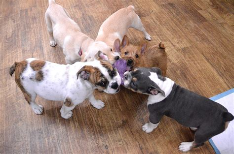 puppy play groups in celebration of national puppy day a globalpetexpo with trainer andrea