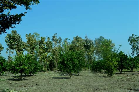 agroforestry at its best trees for pension in uganda oaic