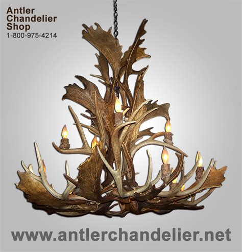 Real Antler Mule Deer Fallow Chandelier 16 20 Lights Antler Chandelier Shop