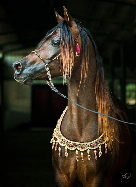when horses are away celebs come out to play photos sowetan live naif rayyan what an incredibly beautiful animal he