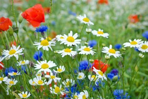 fiori prato adesivo fiore fiori prato pixers 174 viviamo per il