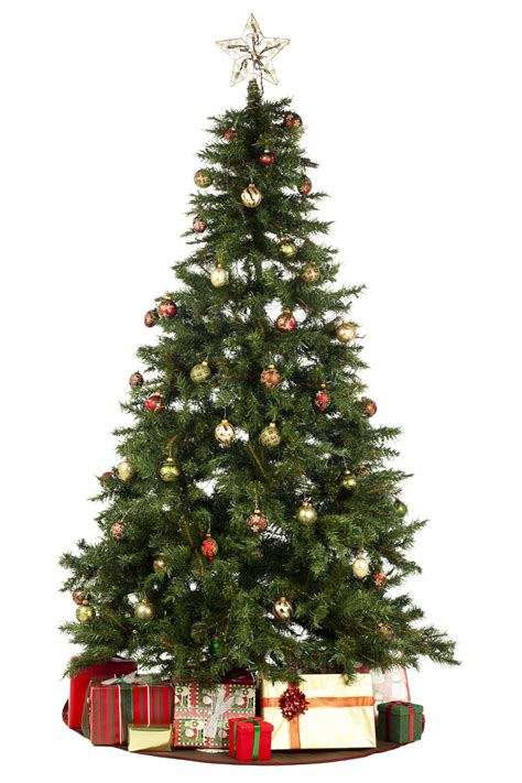 where to put christmas tree noche buena