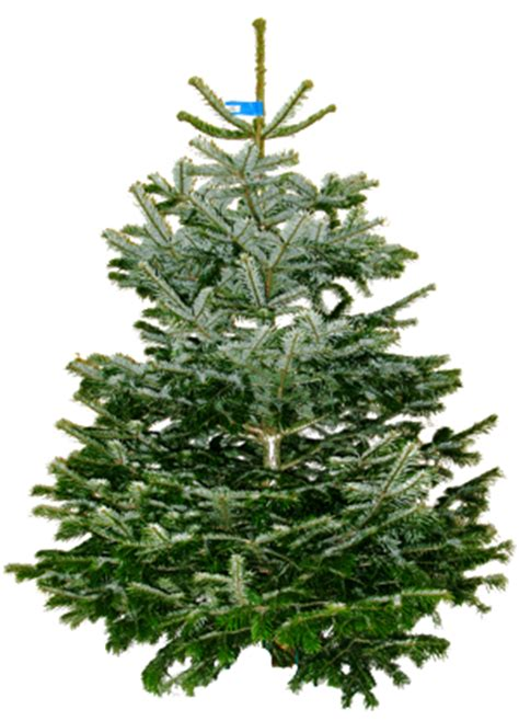 thrift wood forestry christmas tree supplier in milton