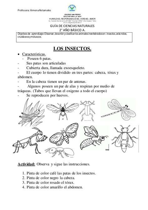 gua de insectos de 8498732514 gu 237 as invertebrados 2 176 b 225 sico