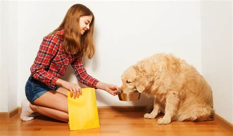 golden retriever diet plan best food for golden retrievers 5 vet recommended brands top tips