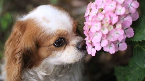 pilze im garten hund giftige pflanzen f 252 r hunde dies sollten sie wissen
