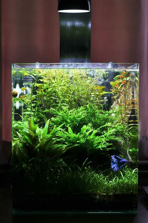 25 best ideas about nano aquarium on betta