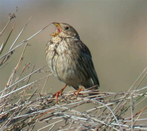 lesvos bird photos