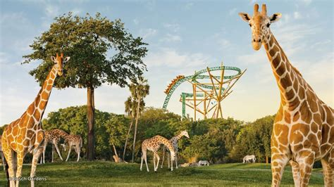 Busch Gardens Theme Park by Busch Gardens Theme Park Theme Park In Ta With Exciting Rollercoasters