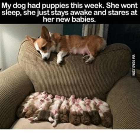 New Dog Meme - my dog had puppies this week she wont sleep she just stays