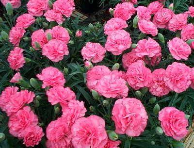 Bouquet Buket Bunga Flanel 12cm Warna Merah Putih Mutiara 1 jenis jenis bunga hias