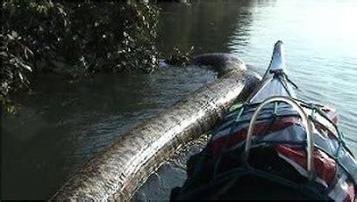 film semangat ular anaconda terbesar di dunia ditemukan di amazon blog