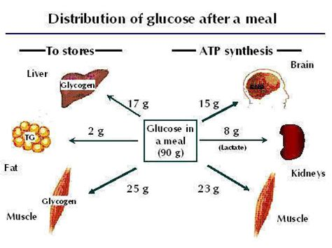 carbohydrates use in human carbohydrate metabolism