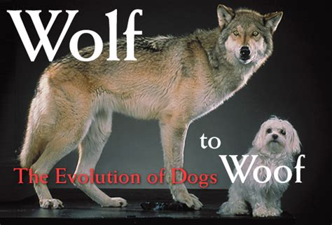 the domestication how wolves and humans coevolved books spiritualism the story about evolution bhavanajagat