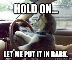 Driving School Meme - i have no idea what i m doing driving dog quickmeme