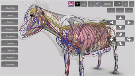 Cow Anatomy Game