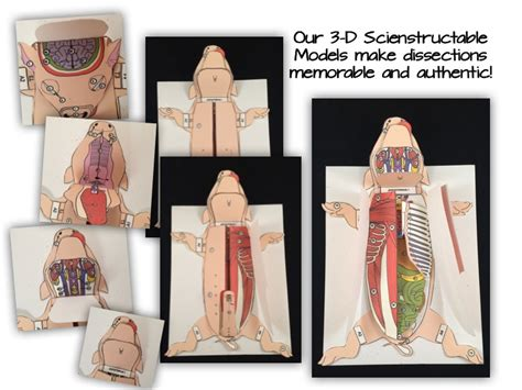 earthworm paper dissection why you should use 3 d paper dissection models for