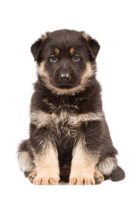 breeds that start with l breeds that start with the letter a a b c d e f g h i j k l breeds picture