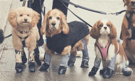 dog leggings   newest pet trend  winter simplemost
