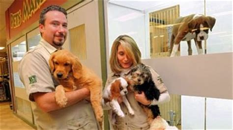 animal shelter puppies for sale petland to sell animals from shelters pittsburgh post gazette