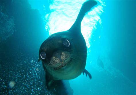 los animales marinos marine 8467535709 fauna marina im 225 genes
