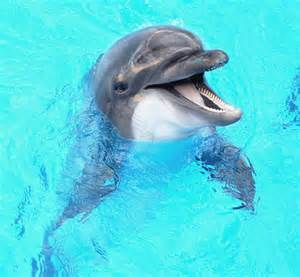 dolphin colors surprising animal vision facts slideshow and quiz