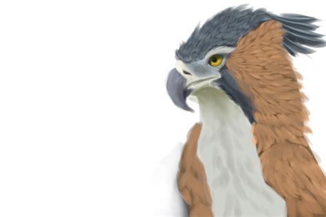 image hawk anansi 001 png crested hawk eagle by fallingfirex on deviantart