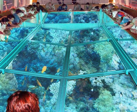 glass bottom boat tour glass boat day trip in the red sea crystal clear view of
