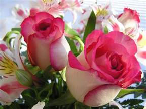 Rose Flower Images by Flowers Wallpapers Roses Flowers Wallpapers