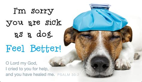 feel better puppy free feel better ecard email free personalized get well cards