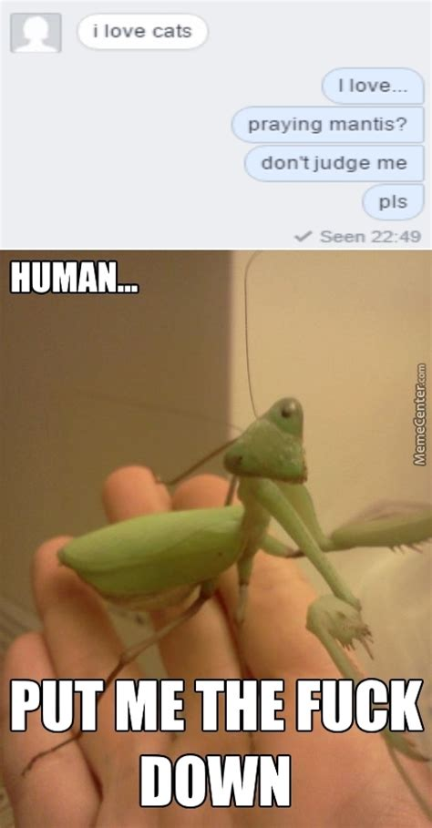 Mantis Meme - mantis meme 28 images 25 best memes about mantis