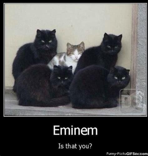 Funny Eminem Memes - eminem memes elakiri community