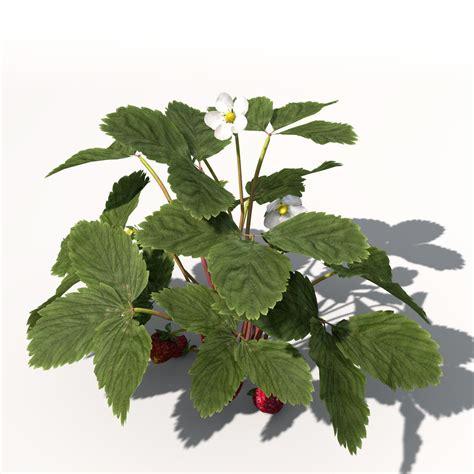 3d 3 Strawberry xfrogplants strawberry free 3d model max obj 3ds c4d lwo
