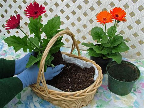 container garden seeds how to create a butterfly garden in containers hgtv