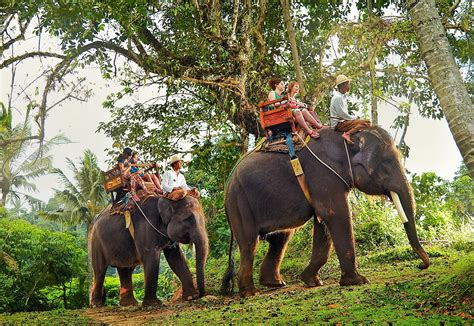 bali elephant ride tour bali cheap tour elephant ride bali tour packages bali