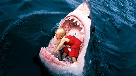 imagenes leones vs tiburones 8 hallazgos incre 237 bles en est 211 magos de tiburones youtube