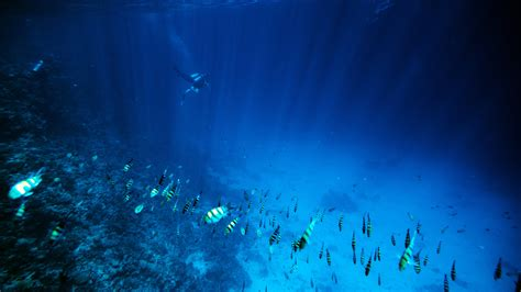 Sea Floor Exploration by Researchers Want To Use Drones For Floor Exploration